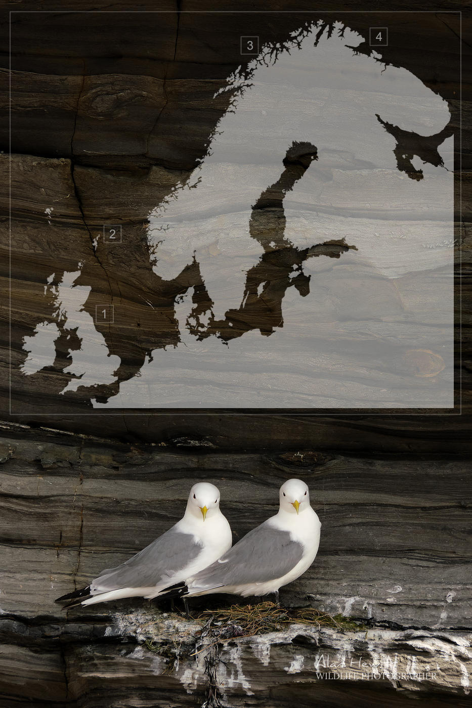 Seabirds in the City Locations