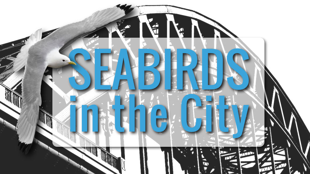 Seabirds in the City