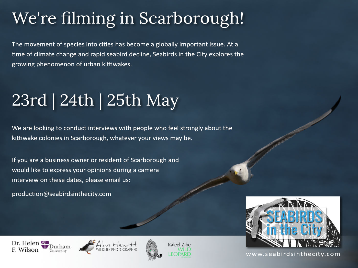 Seabirds in the City filming in Scarborough